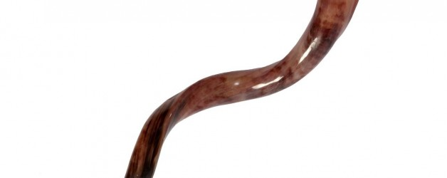 Shofar Sounds – Call to Repentance